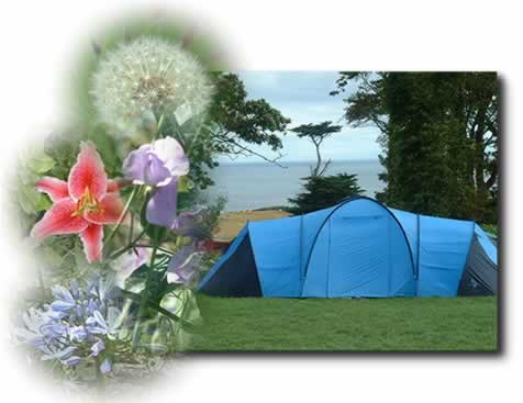 blue tent with flowers